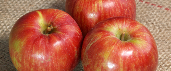 apple-connoisseur